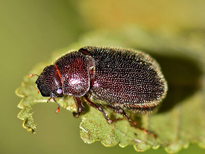 beetle plant biology living things