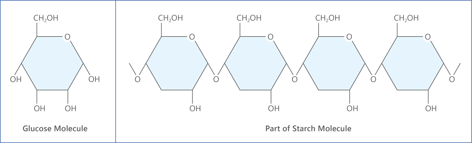 glucose starch molecules