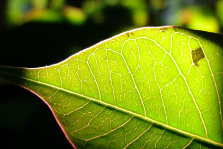 plant leaf sunlight photosynthesis glucose
