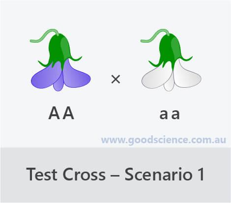 test cross scenario 1