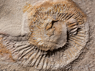 shell imprint fossil